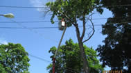 Powerline Certifed Tree Removal Andover CT