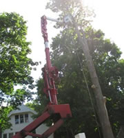 Powerline Certified for Tree Removal